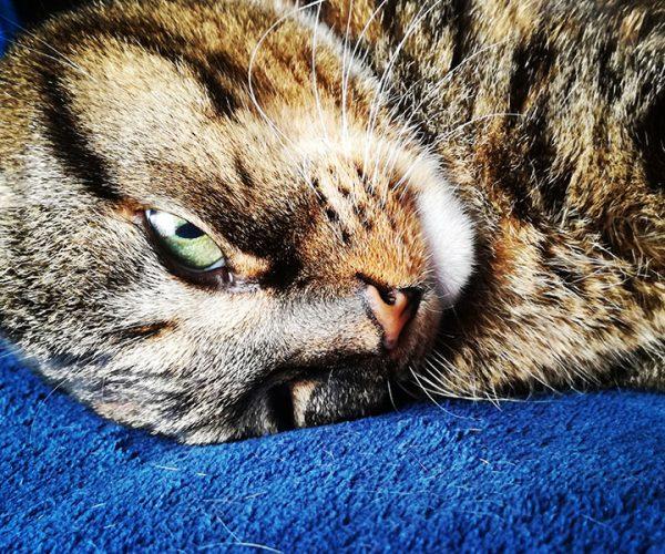 SPCA_HomeGallery_Med_007