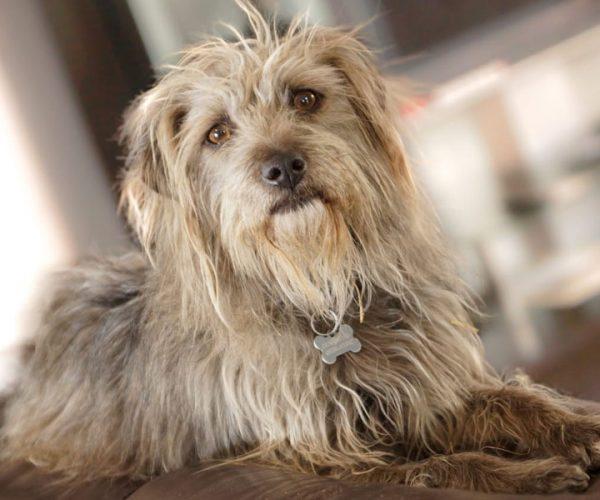 SPCA_HomeGallery_Med_016